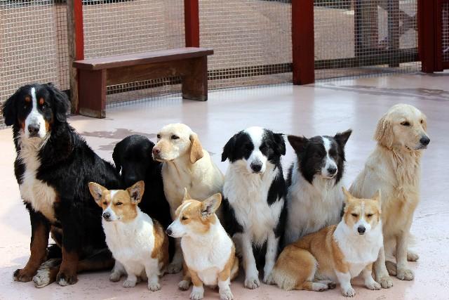 【問題提訴】保護犬カフェって意味ある?