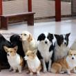 【問題提起】保護犬カフェって意味ある?